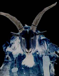 The Demonis Horned Being